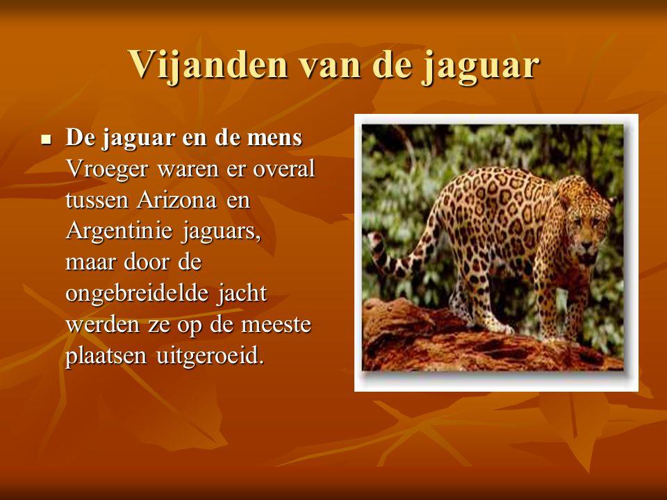 Vijanden van de jaguar