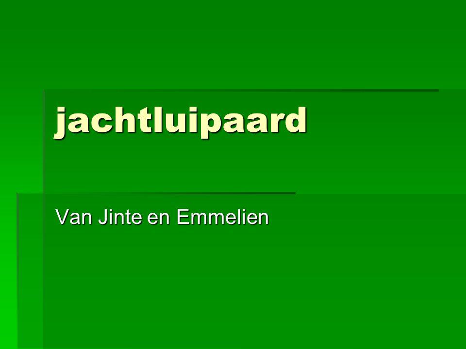 jachtluipaard Van Jinte en Emmelien