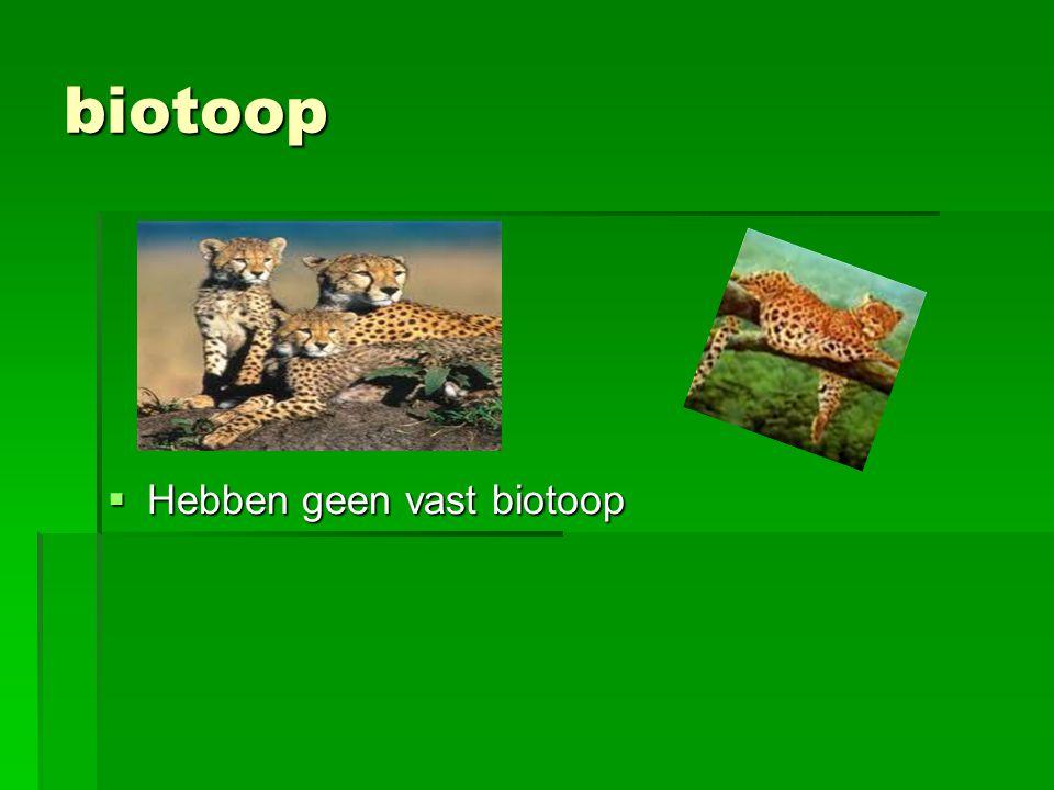 biotoop Hebben geen vast biotoop