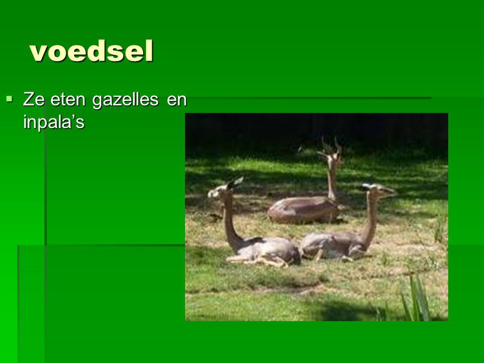 voedsel Ze eten gazelles en inpala's