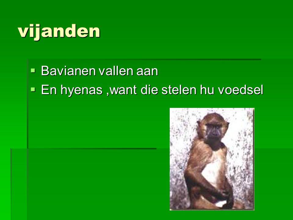 vijanden Bavianen vallen aan En hyenas ,want die stelen hu voedsel