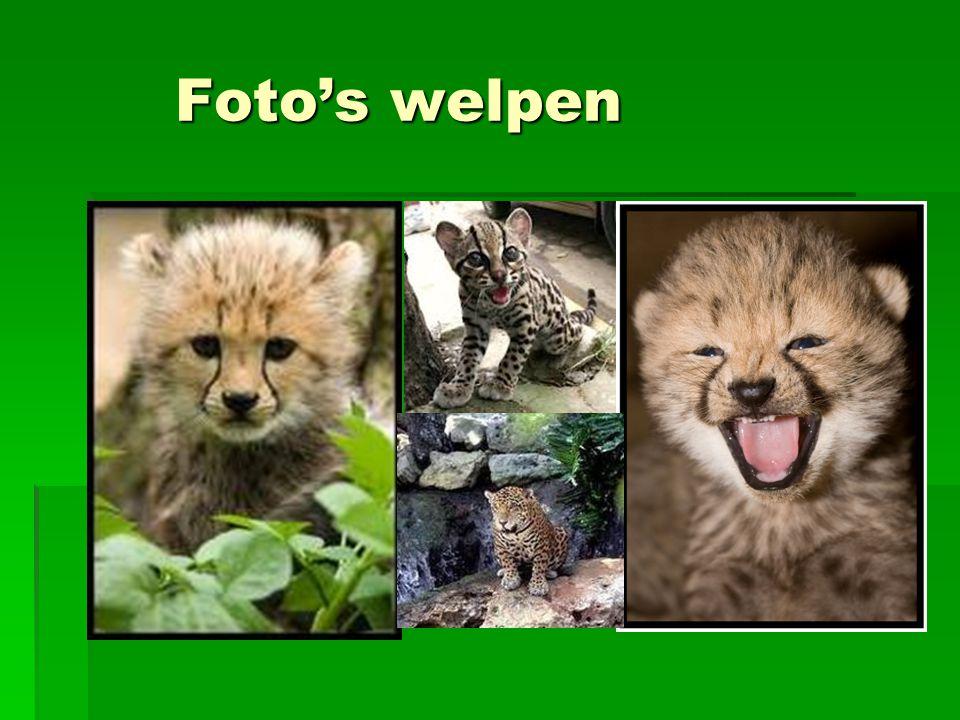 Foto's welpen
