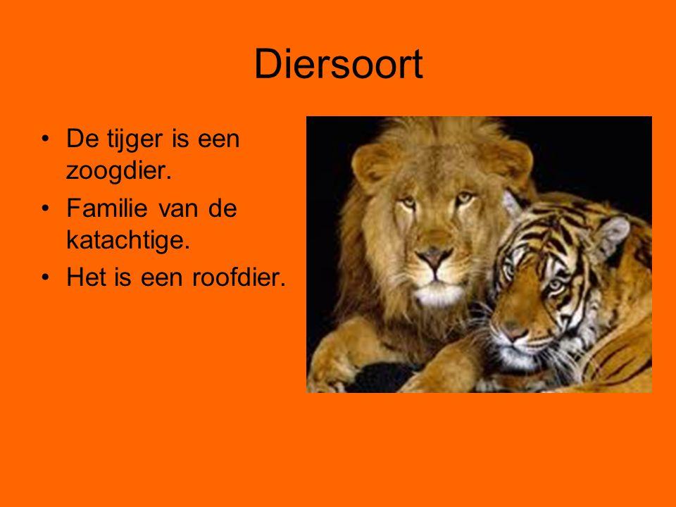 Diersoort De tijger is een zoogdier. Familie van de katachtige.