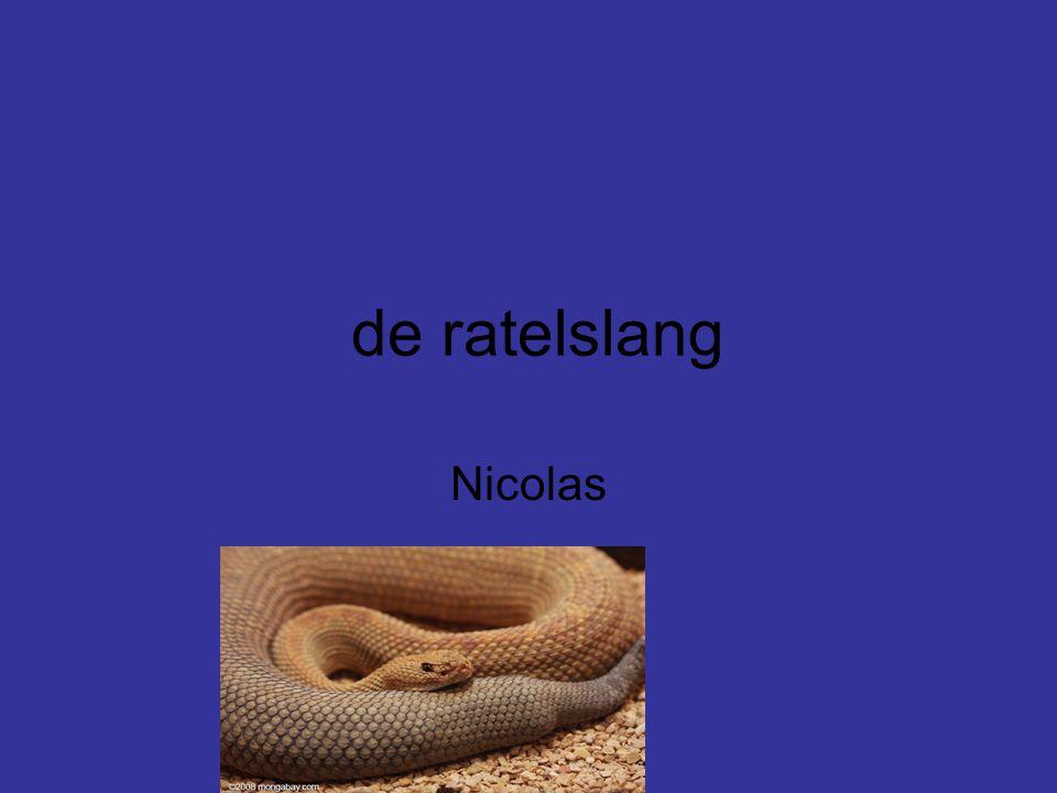 de ratelslang Nicolas