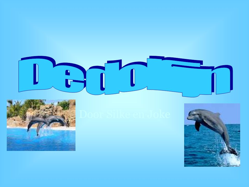 De dolfijn Door Silke en Joke