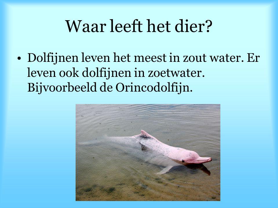 Waar leeft het dier. Dolfijnen leven het meest in zout water.