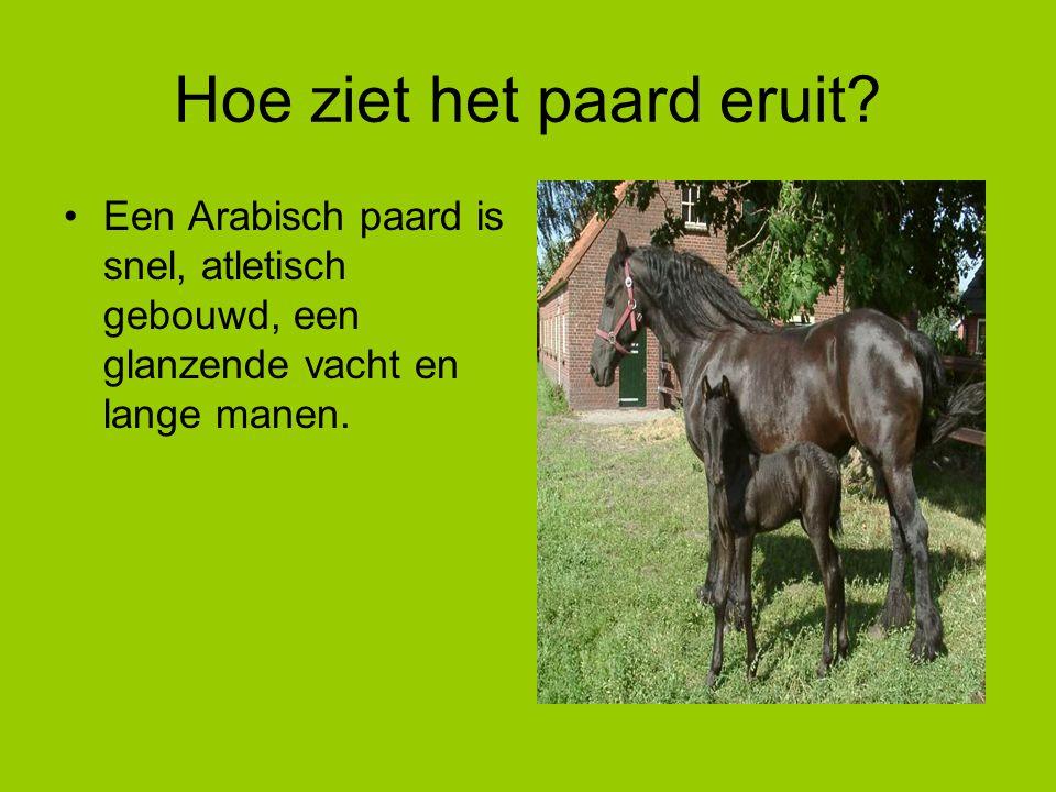 Hoe ziet het paard eruit