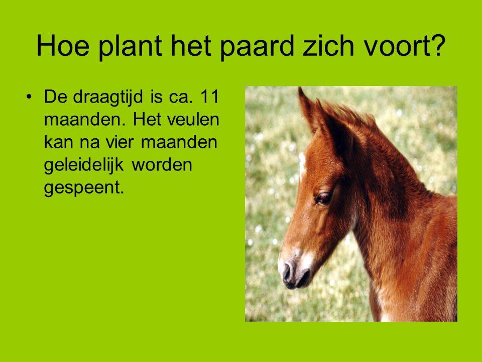Hoe plant het paard zich voort