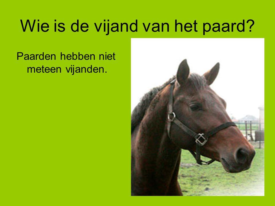 Wie is de vijand van het paard