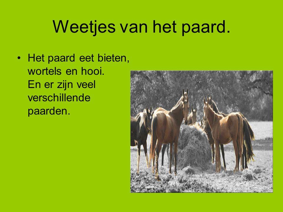 Weetjes van het paard. Het paard eet bieten, wortels en hooi.