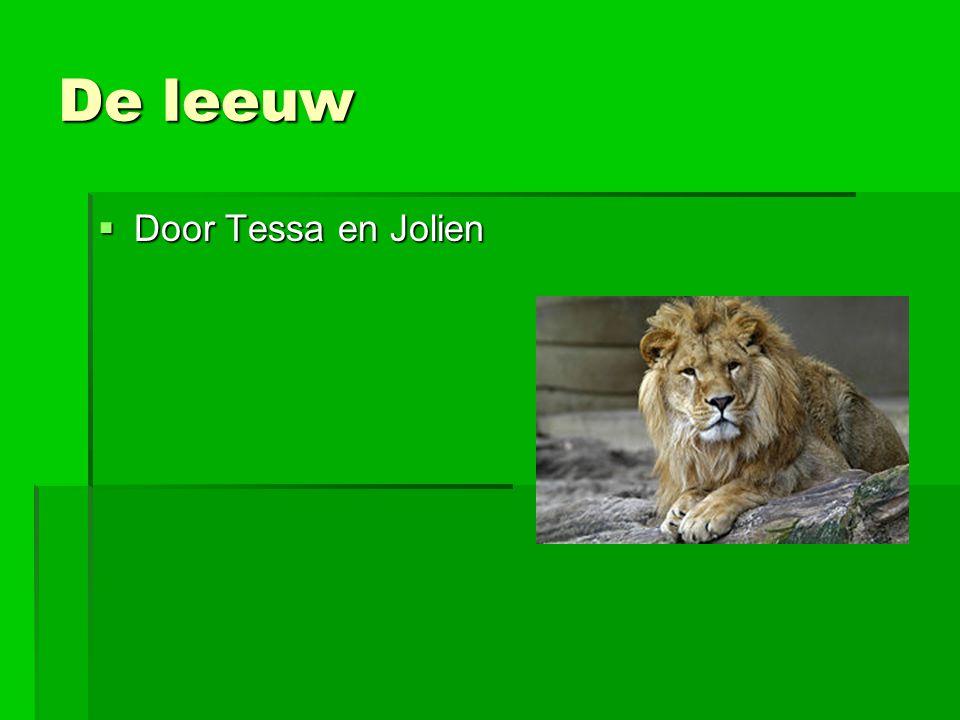 De leeuw Door Tessa en Jolien