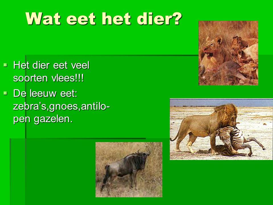 Wat eet het dier Het dier eet veel soorten vlees!!!