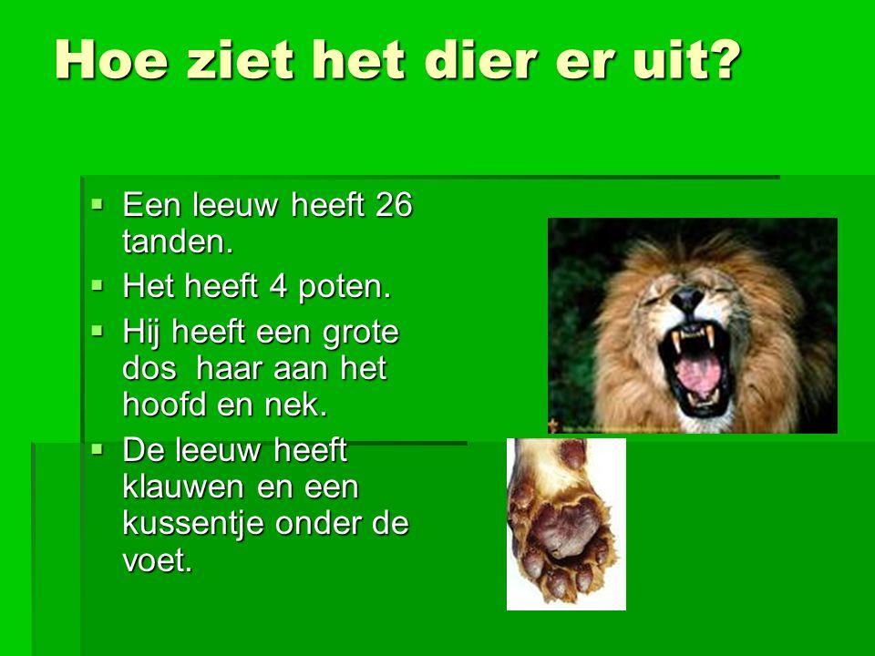 Hoe ziet het dier er uit Een leeuw heeft 26 tanden.