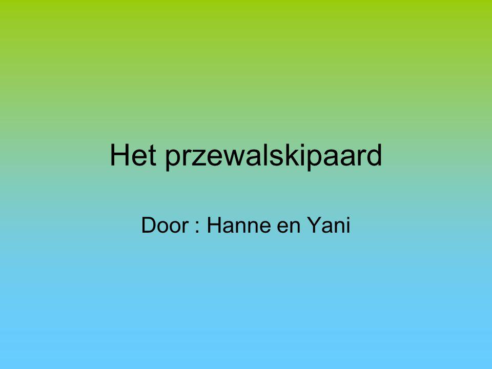 Het przewalskipaard Door : Hanne en Yani