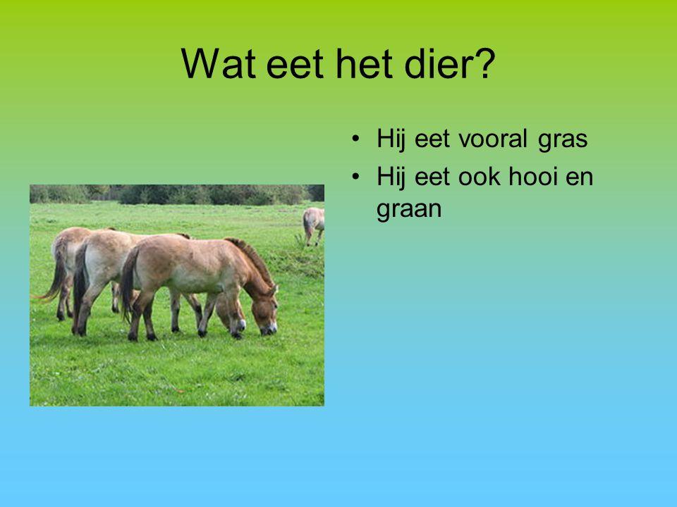 Wat eet het dier Hij eet vooral gras Hij eet ook hooi en graan