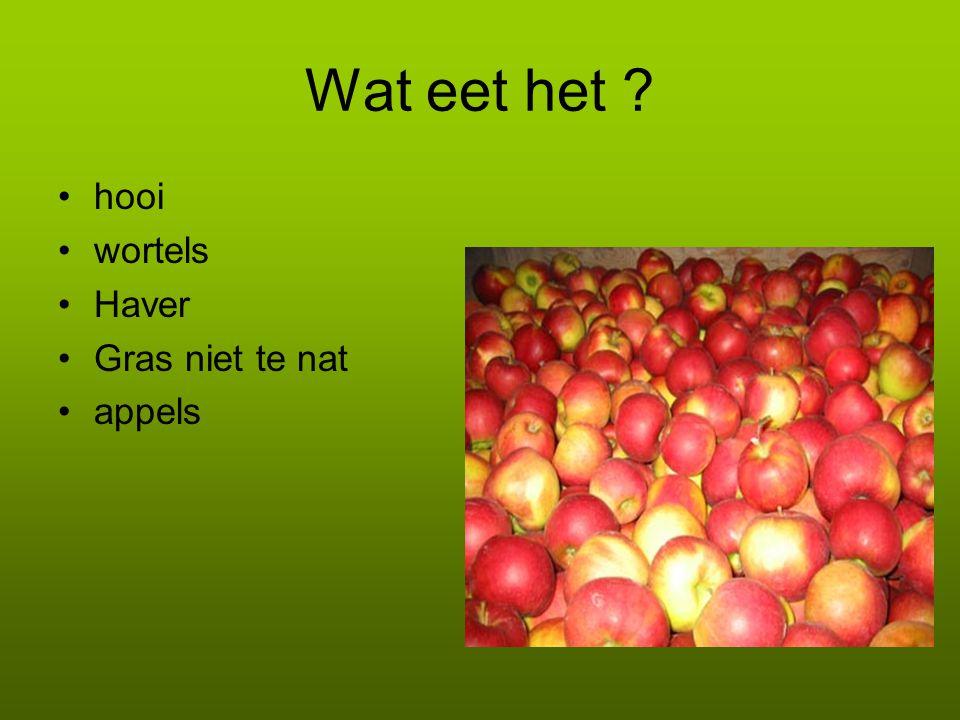 Wat eet het hooi wortels Haver Gras niet te nat appels g g