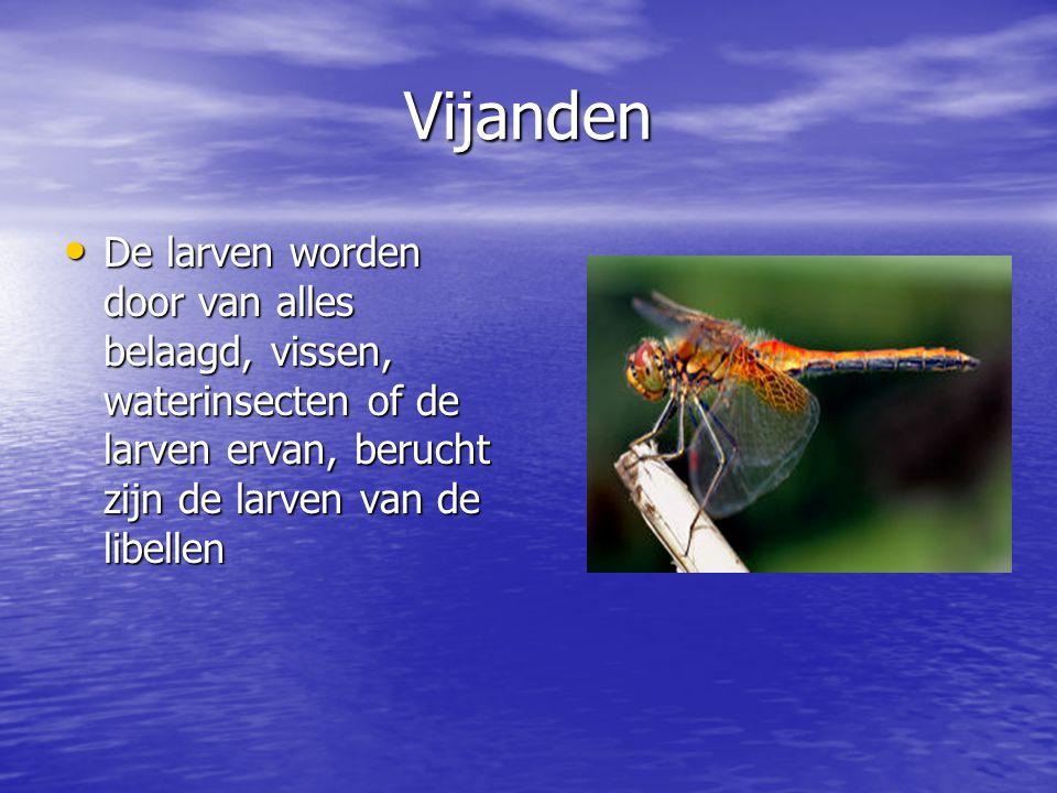 Vijanden De larven worden door van alles belaagd, vissen, waterinsecten of de larven ervan, berucht zijn de larven van de libellen.