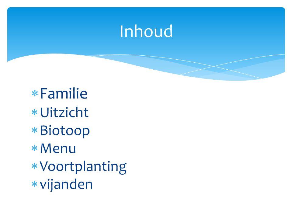 Inhoud Familie Uitzicht Biotoop Menu Voortplanting vijanden