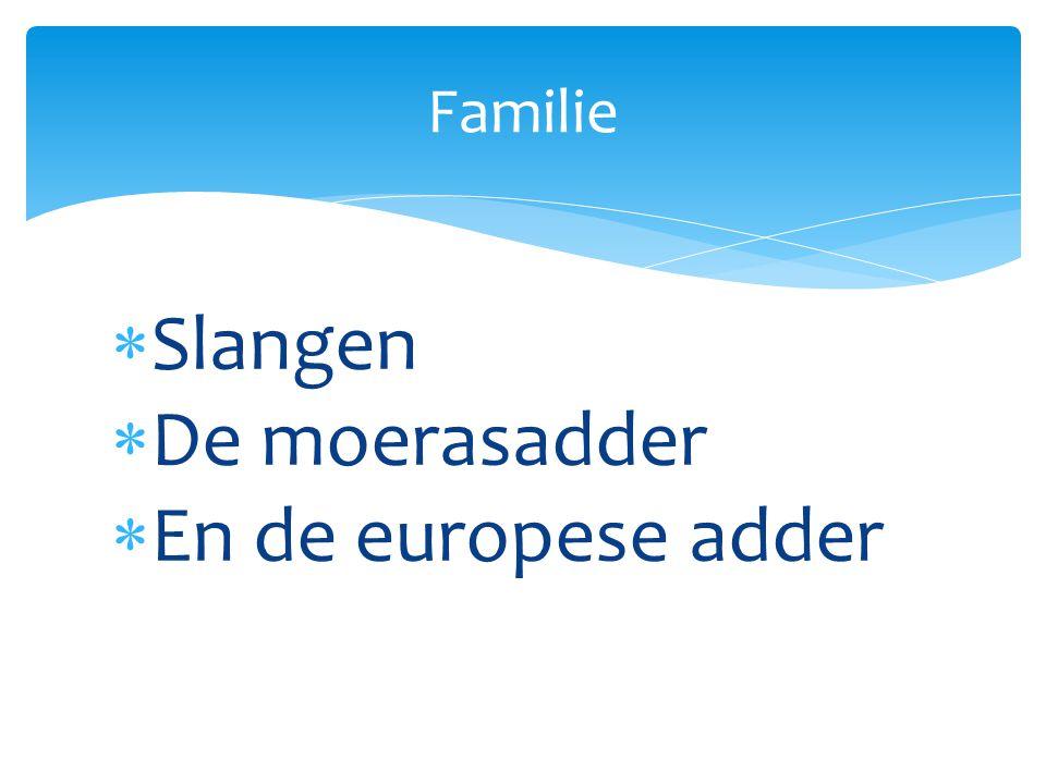 Familie Slangen De moerasadder En de europese adder