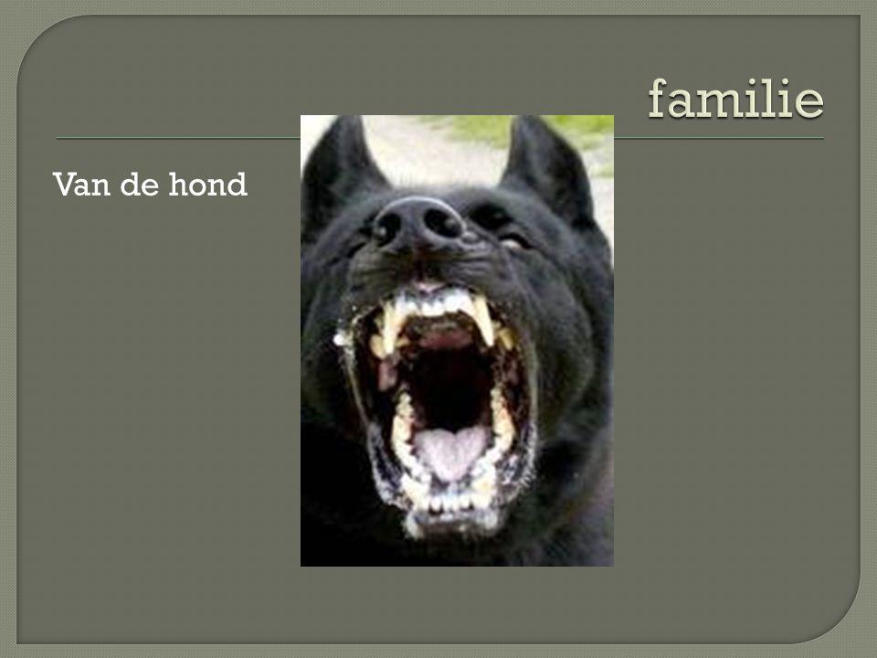 familie Van de hond De vos is familie van de hond