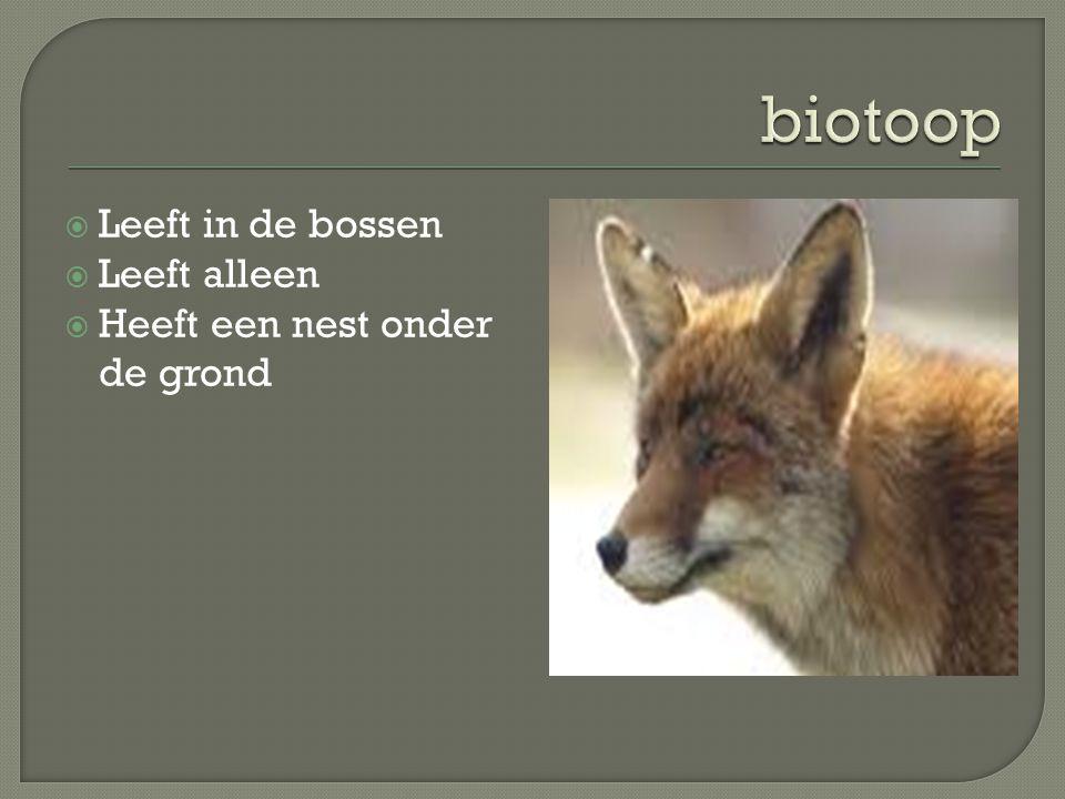 biotoop Leeft in de bossen Leeft alleen Heeft een nest onder de grond