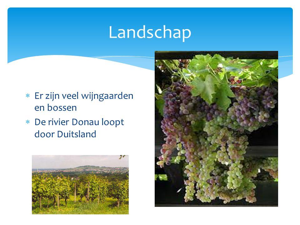 Landschap Er zijn veel wijngaarden en bossen