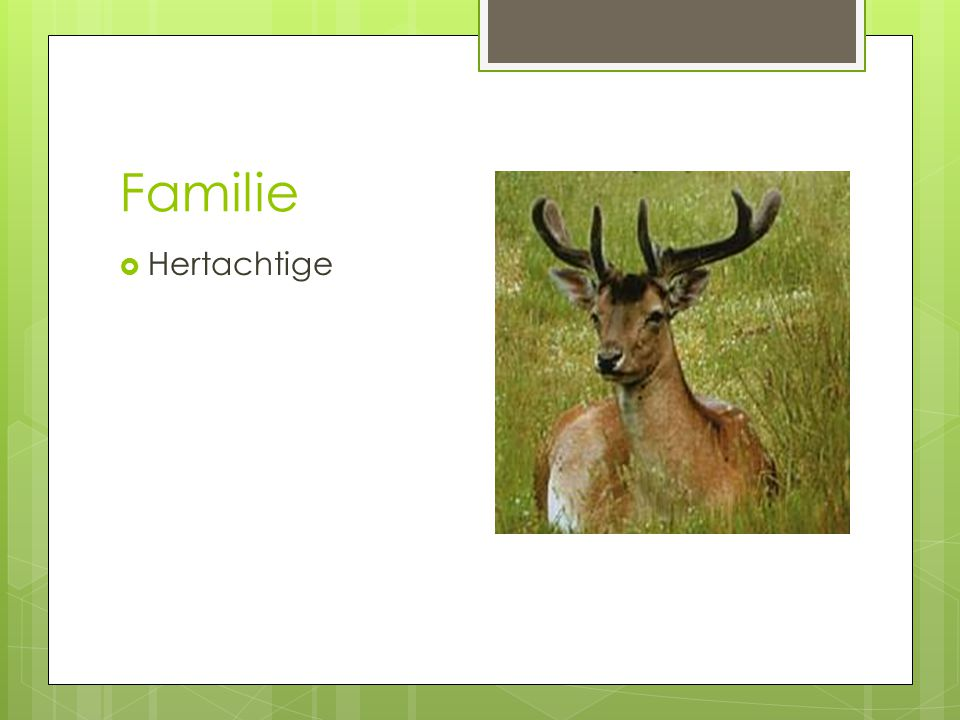 Familie Hertachtige