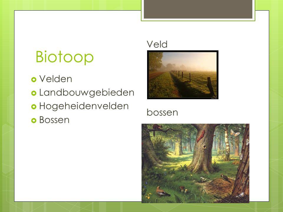 Biotoop Veld bossen Velden Landbouwgebieden Hogeheidenvelden Bossen