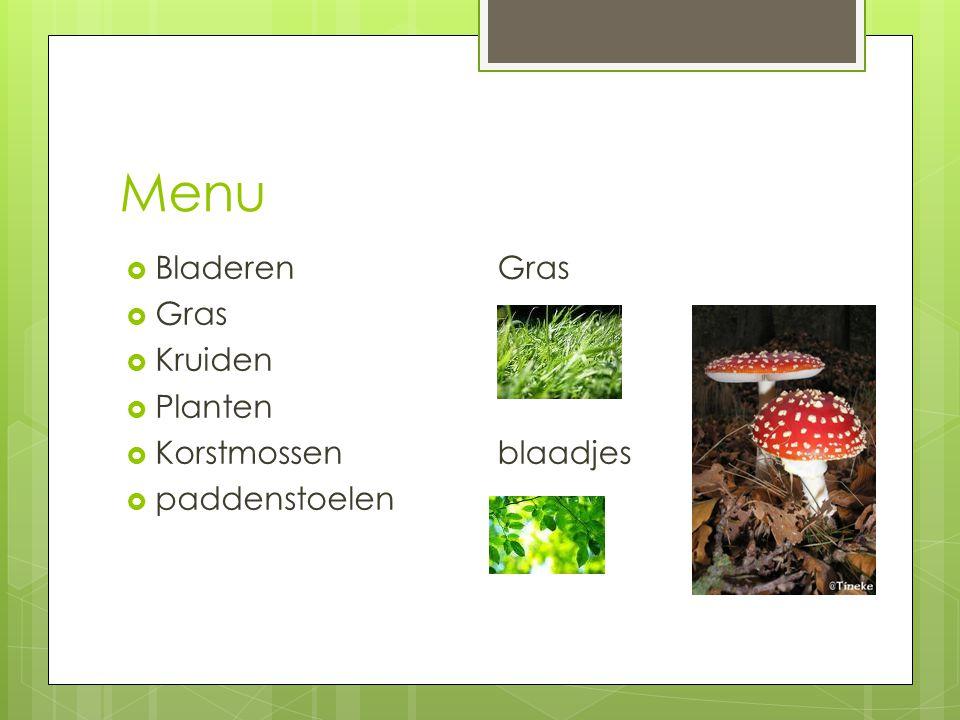 Menu Bladeren Gras Kruiden Planten Korstmossen paddenstoelen
