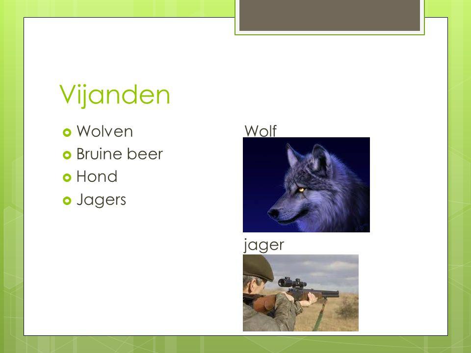 Vijanden Wolven Bruine beer Hond Jagers Wolf jager