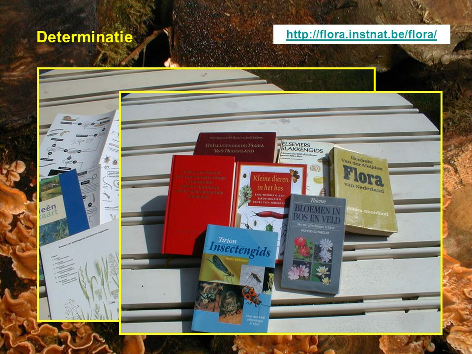 Determinatie http://flora.instnat.be/flora/