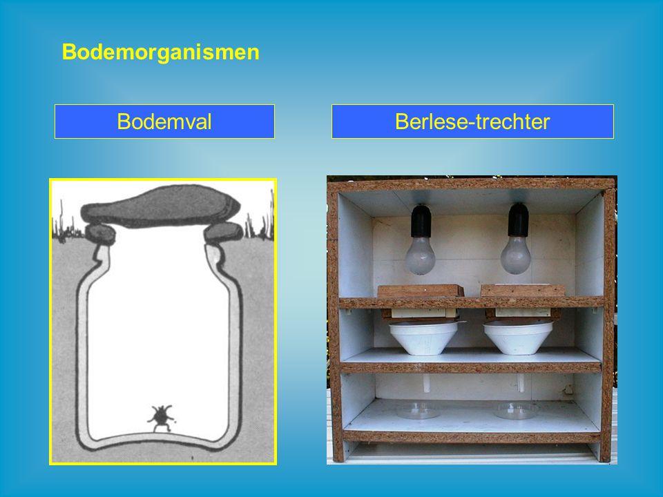 Bodemorganismen Bodemval Berlese-trechter