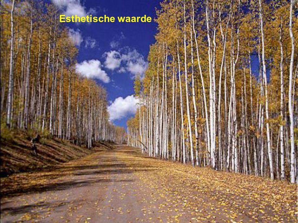 Esthetische waarde