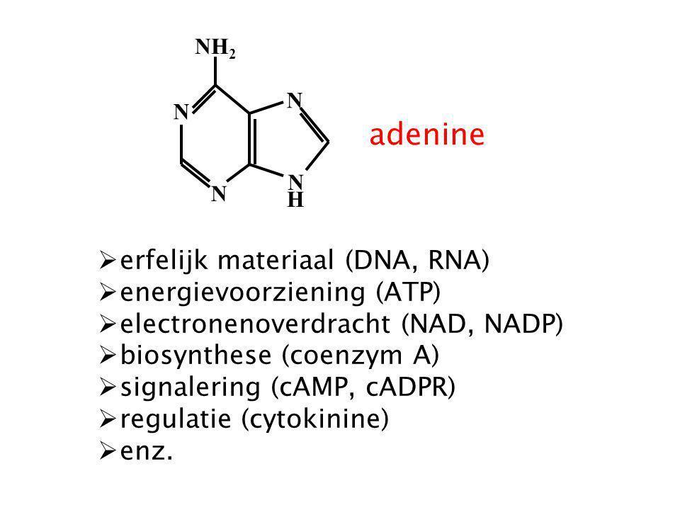 adenine erfelijk materiaal (DNA, RNA) energievoorziening (ATP)
