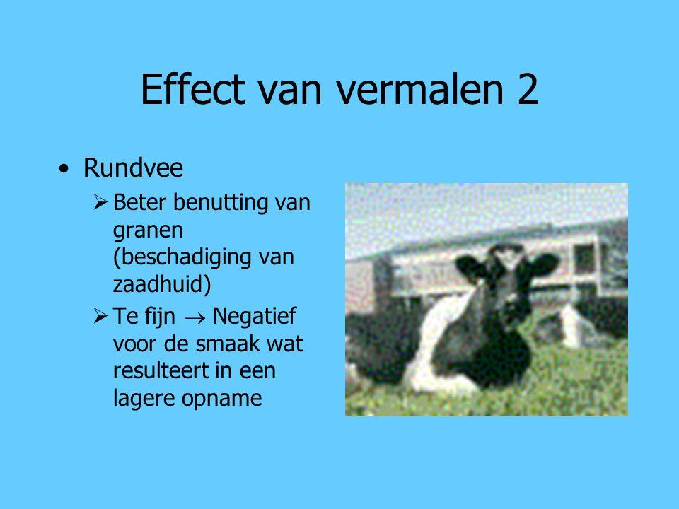 Effect van vermalen 2 Rundvee