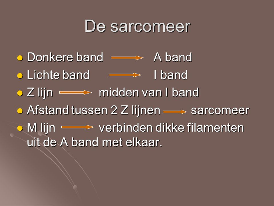 De sarcomeer Donkere band A band Lichte band I band