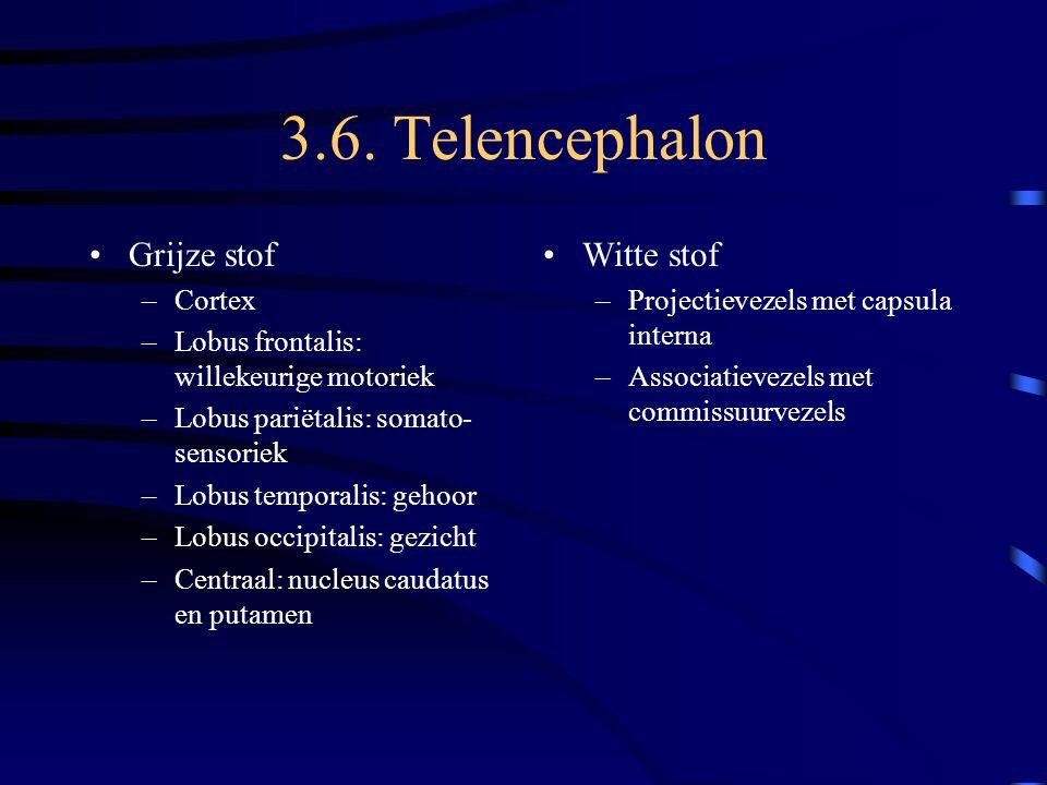 3.6. Telencephalon Grijze stof Witte stof Cortex