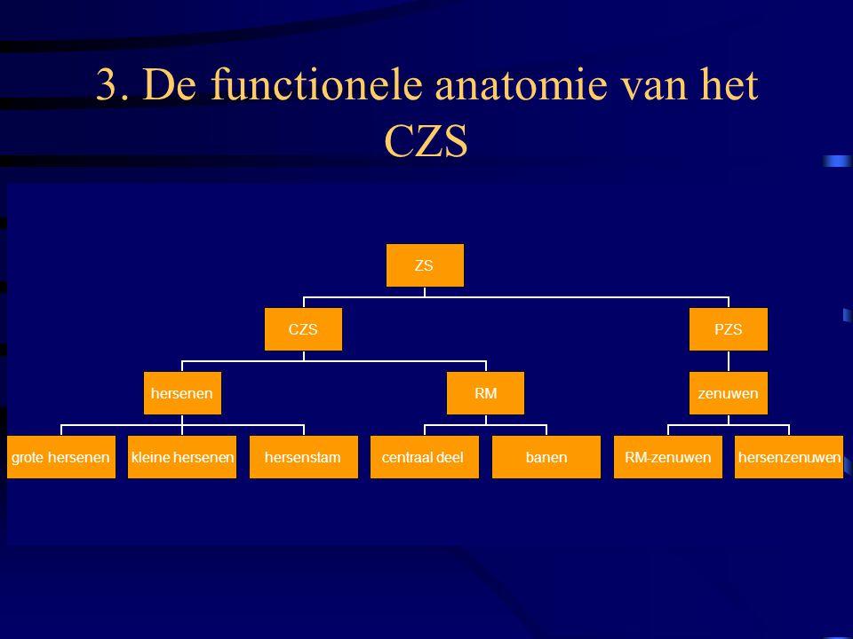 3. De functionele anatomie van het CZS