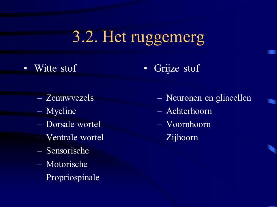 3.2. Het ruggemerg Witte stof Grijze stof Zenuwvezels Myeline