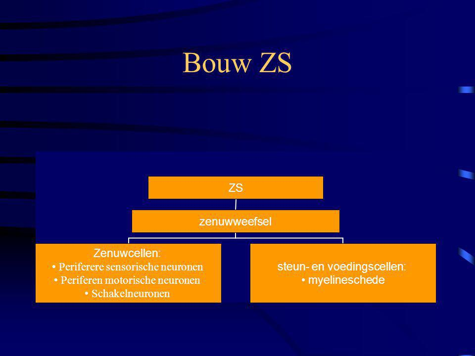 Bouw ZS