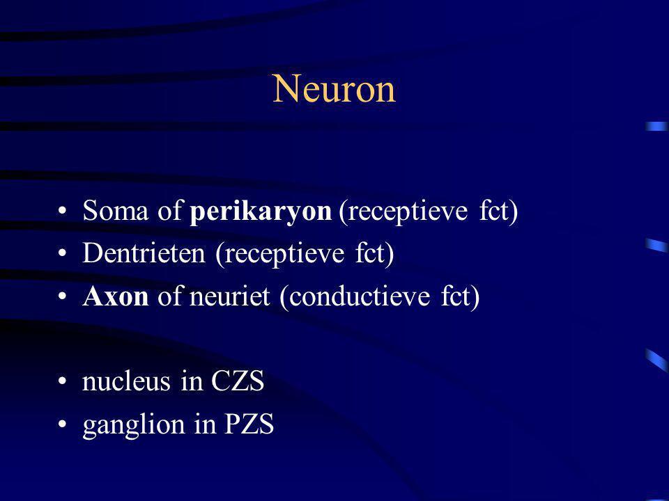 Neuron Soma of perikaryon (receptieve fct) Dentrieten (receptieve fct)