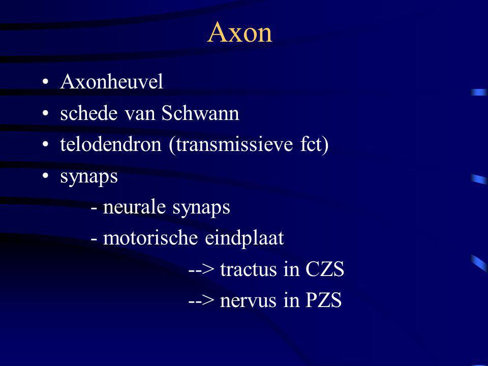 Axon Axonheuvel schede van Schwann telodendron (transmissieve fct)