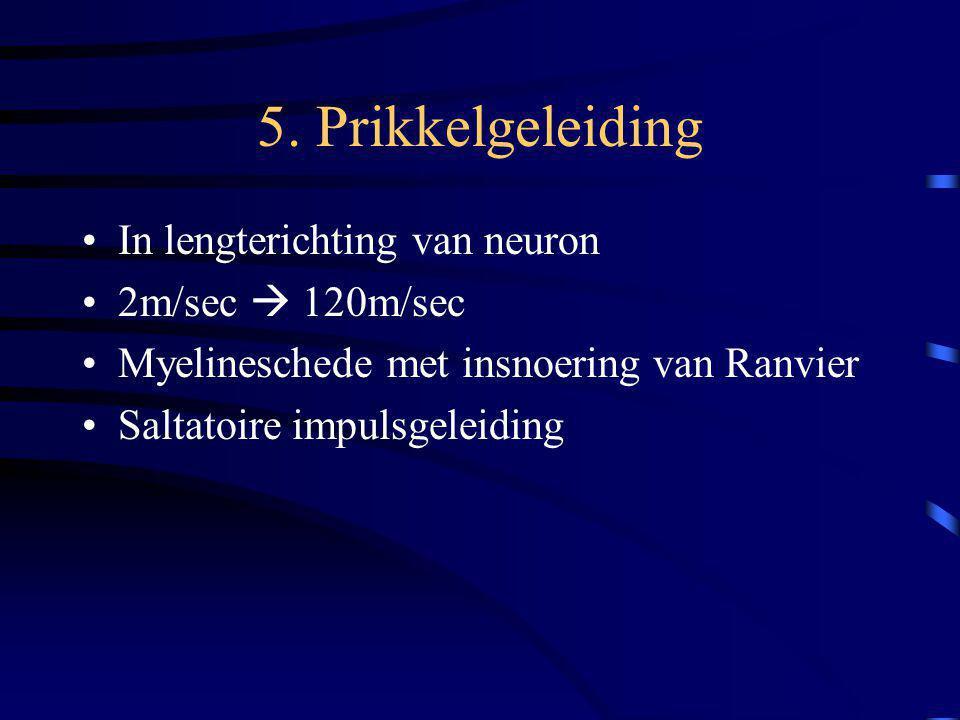 5. Prikkelgeleiding In lengterichting van neuron 2m/sec  120m/sec