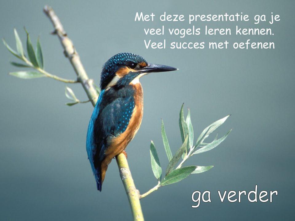 ga verder Met deze presentatie ga je veel vogels leren kennen.