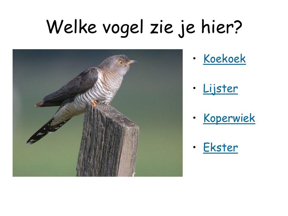 Welke vogel zie je hier Koekoek Lijster Koperwiek Ekster