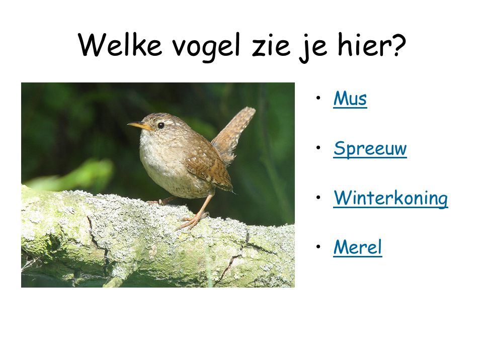 Welke vogel zie je hier Mus Spreeuw Winterkoning Merel