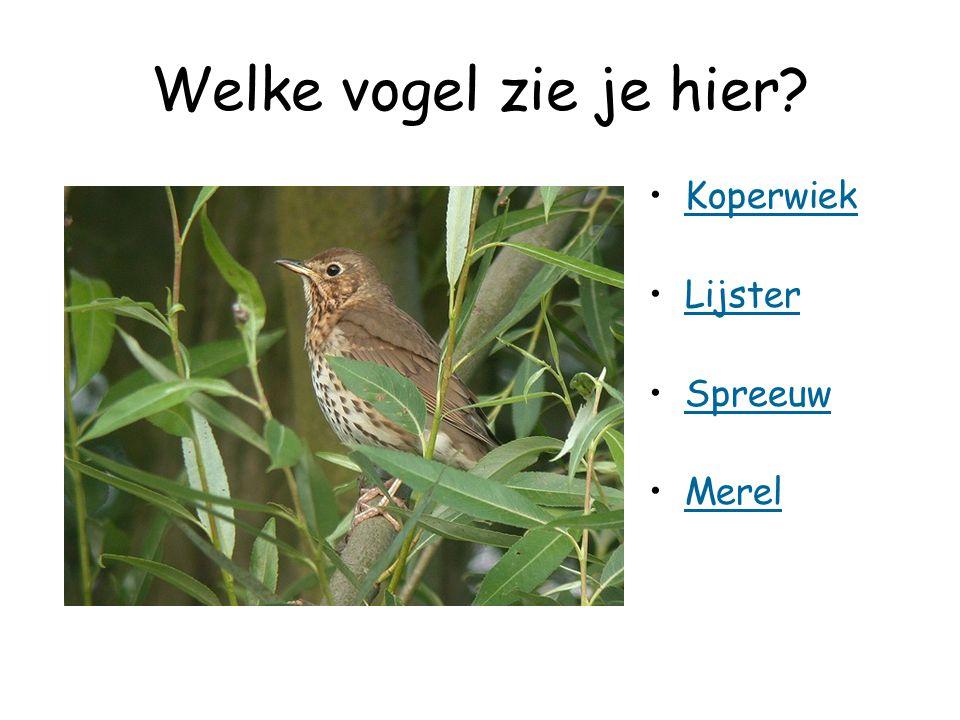 Welke vogel zie je hier Koperwiek Lijster Spreeuw Merel