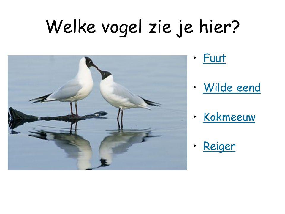 Welke vogel zie je hier Fuut Wilde eend Kokmeeuw Reiger