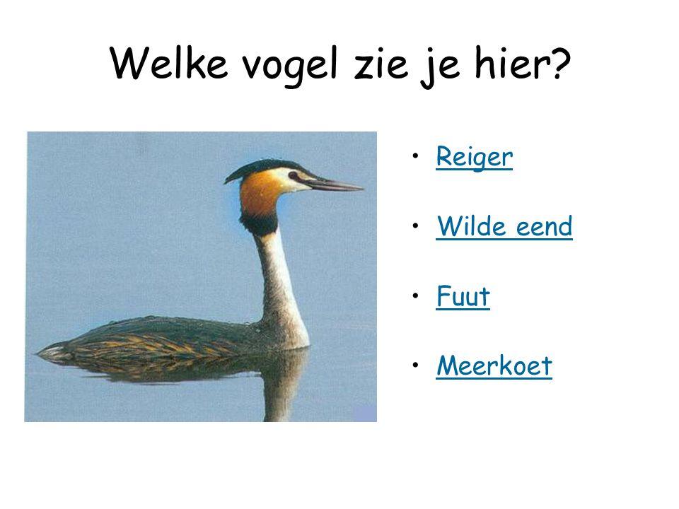Welke vogel zie je hier Reiger Wilde eend Fuut Meerkoet