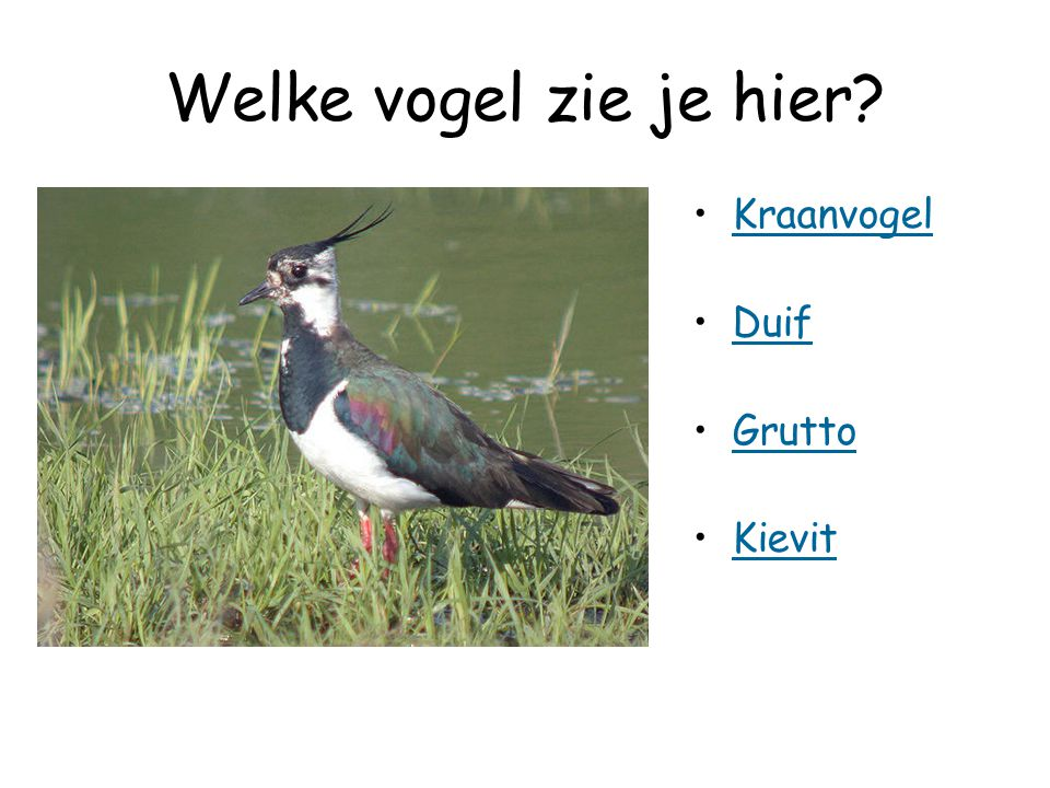 Welke vogel zie je hier Kraanvogel Duif Grutto Kievit